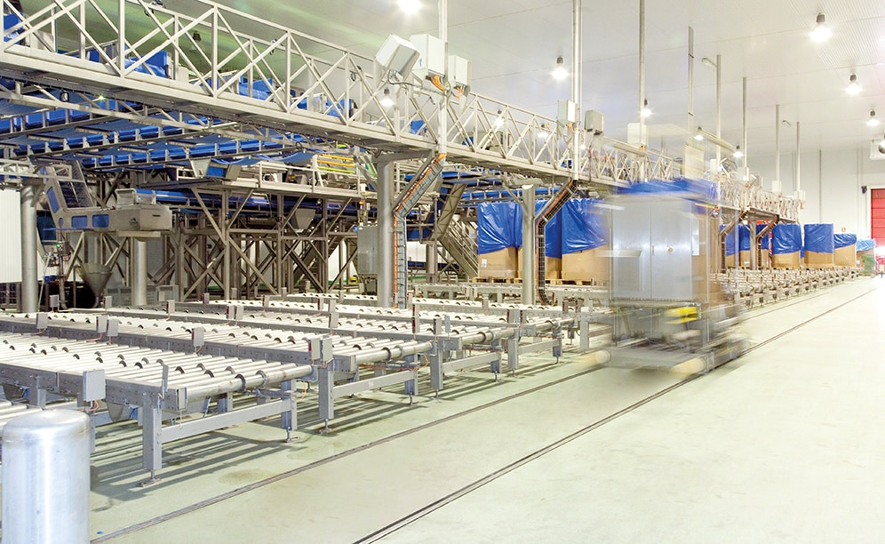 Channels of roller conveyors are mounted just below the sorting lines