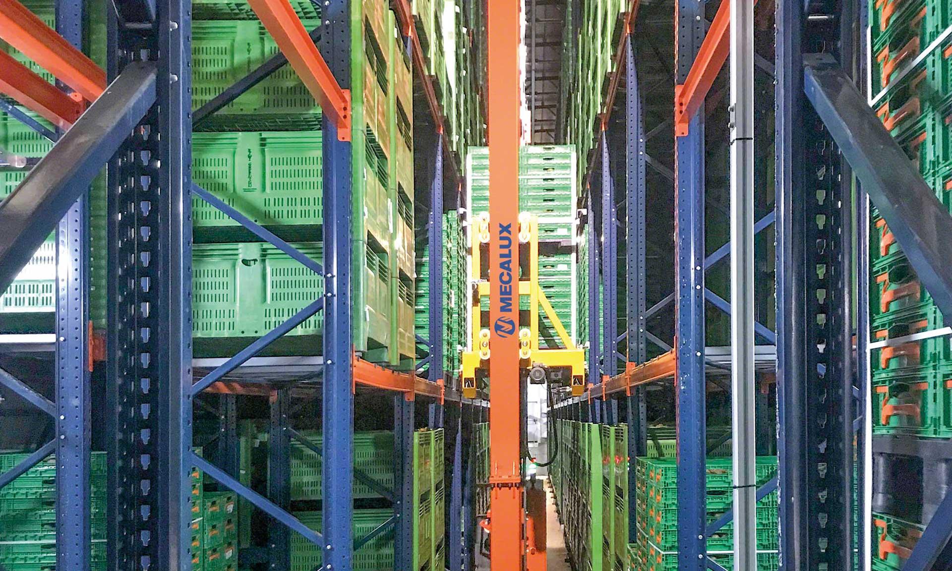 Kiwi Greensun: the perfect degree of ripeness for a cold storage warehouse